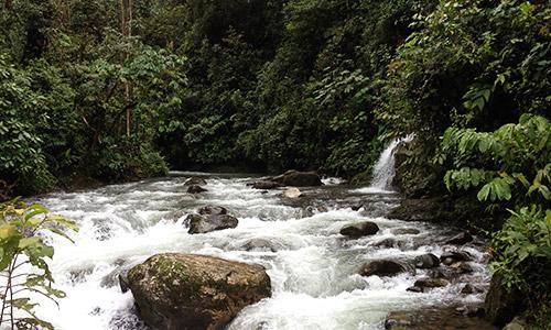 Tours en la Amazonía