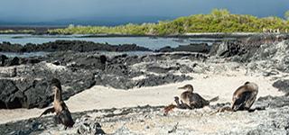 espinoza point galapagos-islands