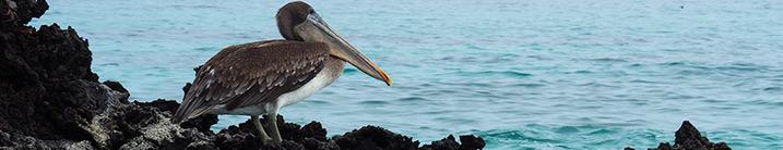 Galapagos Cruises - wildlife