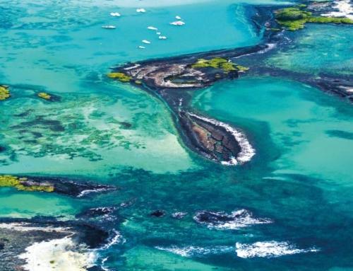 ¿Cómo identificar el Mejor Crucero de Galápagos?