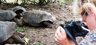 Turtle Galapagos