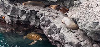 galapagos islands cruises ecuador