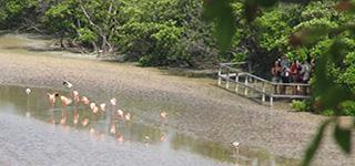 galapagos islands isabela tours