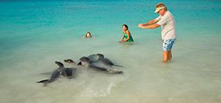 Tortugas gigantede de Galápagos