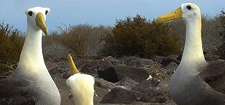Punta Suuares | Islas Galápagos