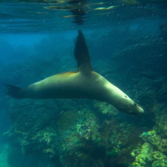 snorleking in galapagos islands