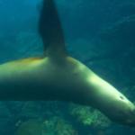 snorkel in galapagos