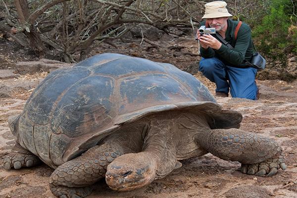 galapagos-islands-turtles