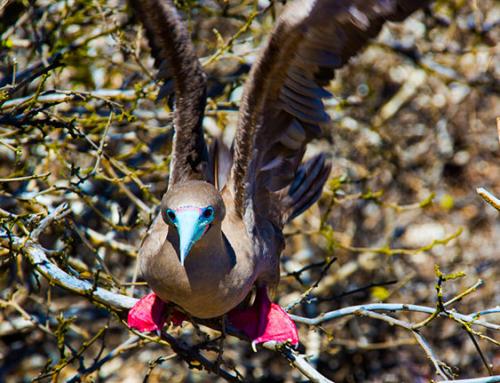 Tour Genovesa: Wildlife Adventure