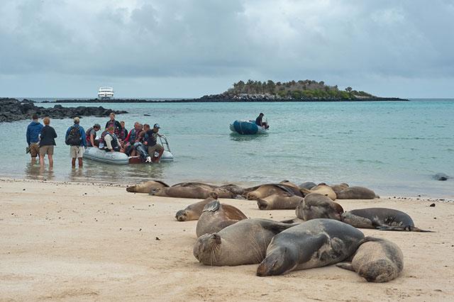 Galapagos islands wet landing