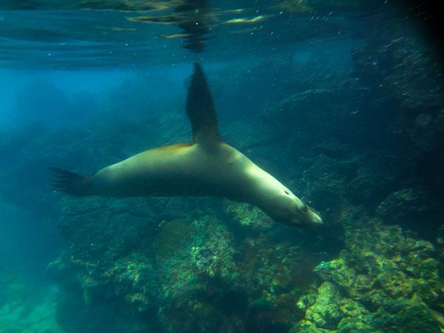 galapagos islands snorkeling