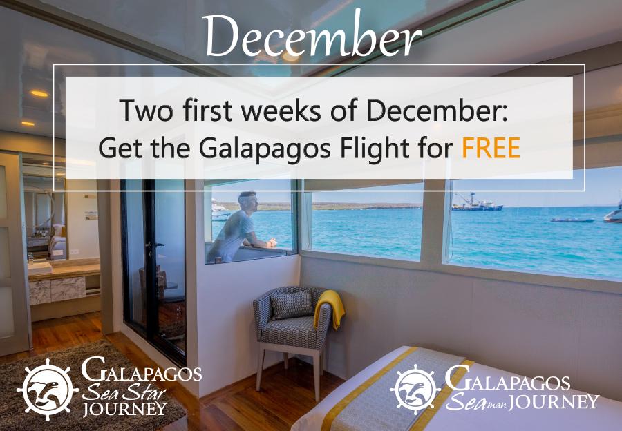 Galapagos Cruises Last Minutes december