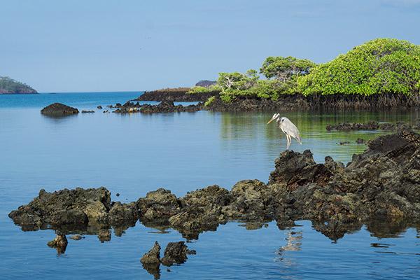 cruises to isabela island