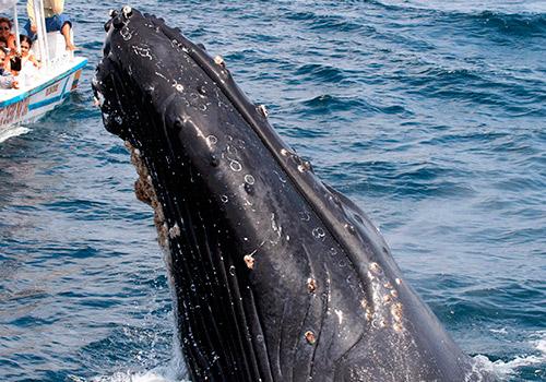 whale watching Ecuador