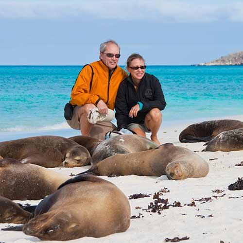 Sea Lions | Galapagos Islands