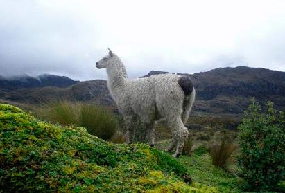 Cajas National Park | Ecuador