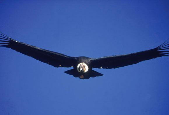 condor-huasi-zuleta