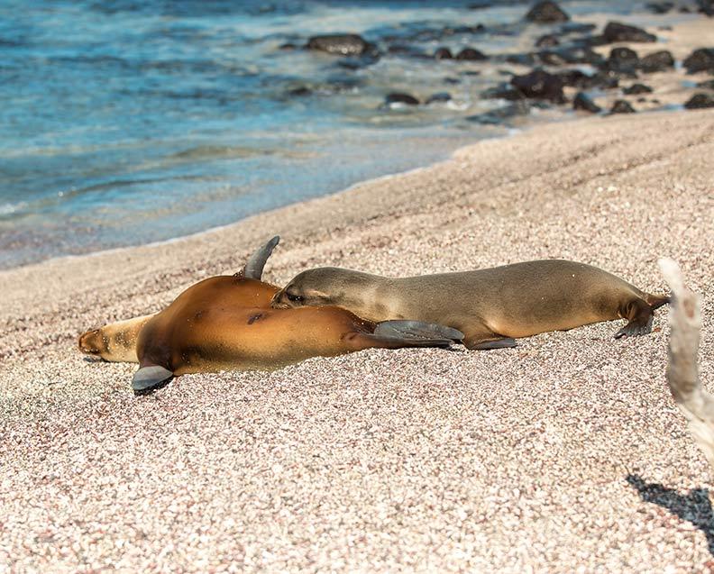 San Cristobal Island Tour Galapagos
