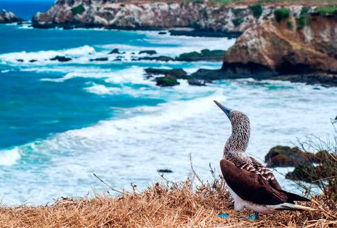 Bird Galapagos