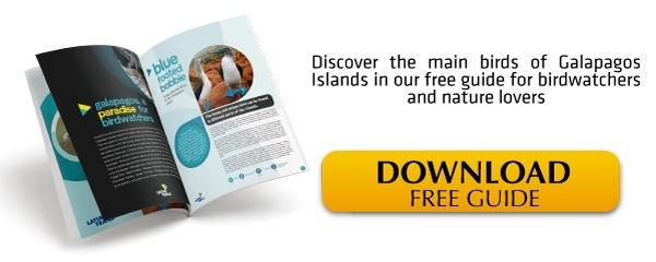 Galapagos Birdwatching | Ebook