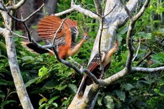 Ecuadorian Amazon a paradise of fauna1
