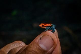 Ecuadorian Amazon a paradise of fauna2