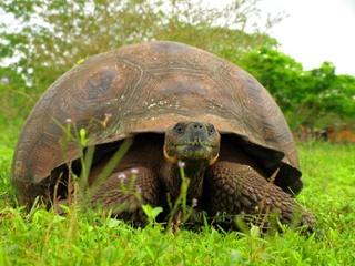 Turtle | Galapagos
