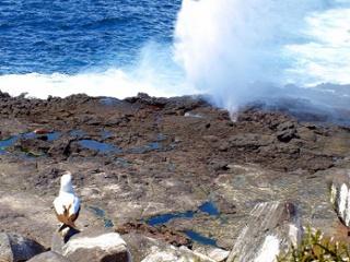 Española Island | Suarez Point | Galapagos
