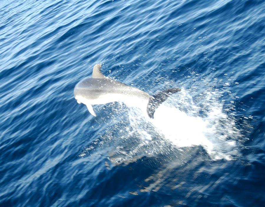Galapagos Islands delfin