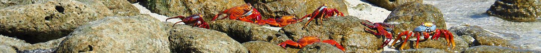 Galapagos Cruises - crabs