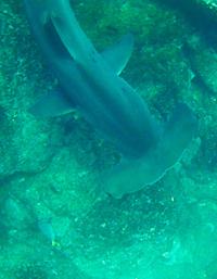 hammered-sharks1