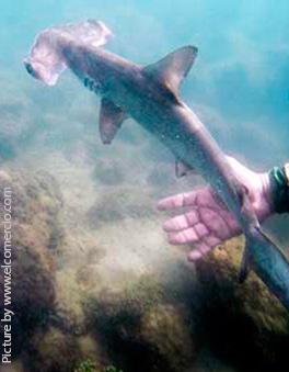hammered-sharks2