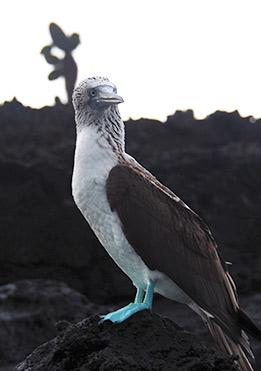 birdlife-in-Galapagos-latin-trails1-1