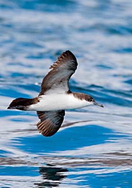 birdlife-in-Galapagos-latin-trails10