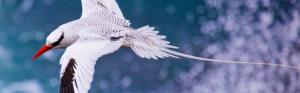 The birdlife in Galapagos (Part 1)