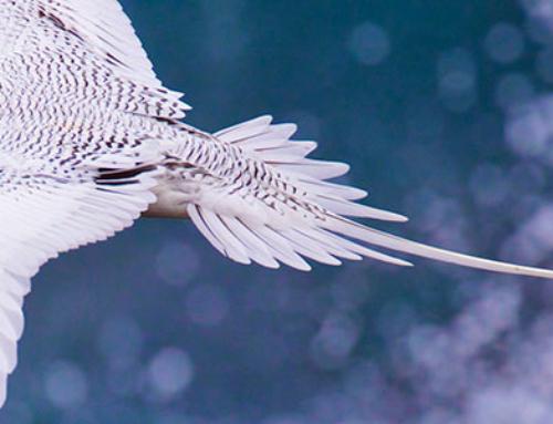 Las aves de Galápagos (primera parte)