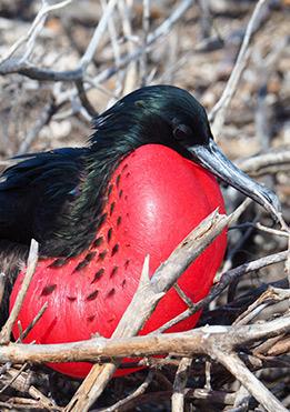 birdlife-in-Galapagos-latin-trails4