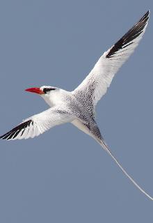 birdlife-in-Galapagos-latin-trails6