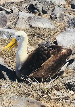 birdlife-in-Galapagos-latin-trails8