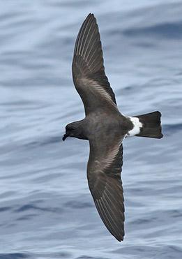 birdlife-in-Galapagos-latin-trails9