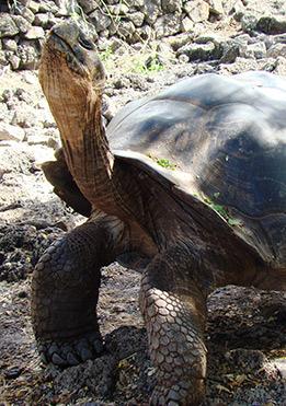 charles-darwin-research-galapagos4
