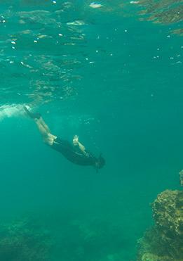 Galapagos Islands Snorkeling | Galapagos Experiences