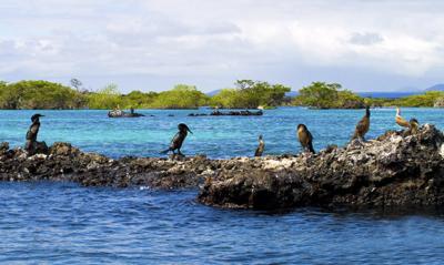 Galapagos Islands | Isabela Island | Cormorants