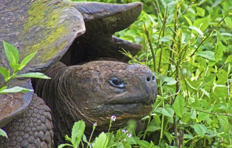 Santa Cruz Island | Galapagos | Gian Tortoises