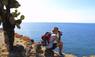 Santa Fe Island   Galapagos   Cactus