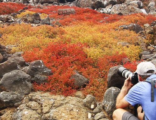 Los sitios que no deberías perderte en Galápagos