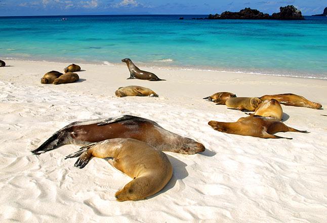 Gardner Bay   Española   Galápagos