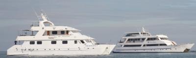 Seamany | Sea Star