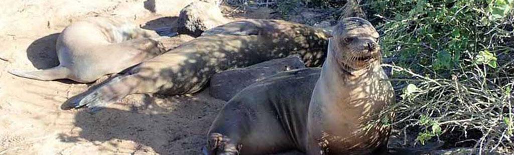 Sea Lions | Galapagos cruises