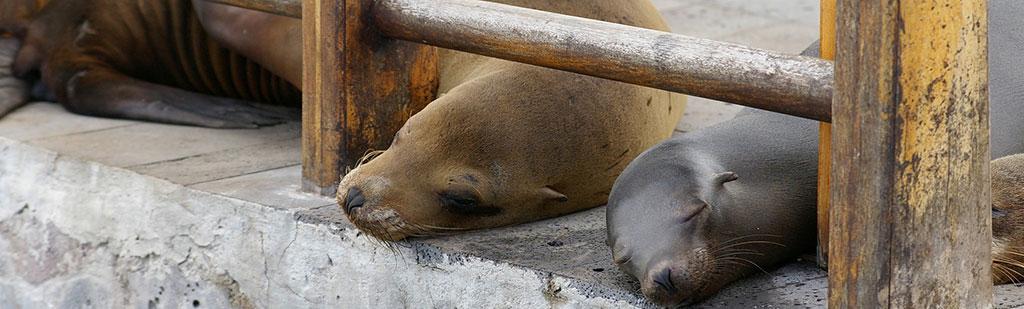 Sea Lion baby | Galapagos cruise